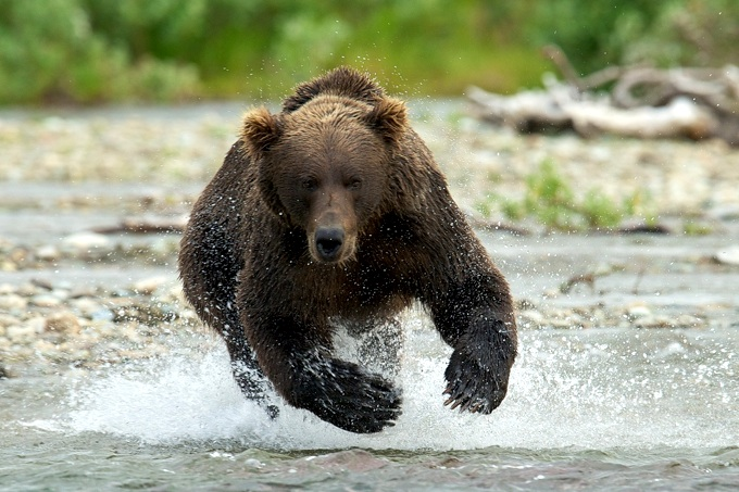 """""""If I survive this, I'm going to need brie!"""" Photo - www.nationalparkstraveler.com"""