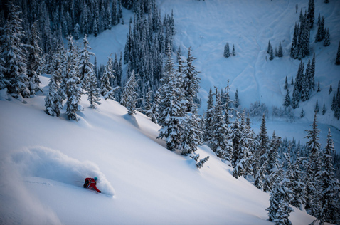 treeskiing at Last Frontier Heliskiing. Photo - Reuben Krabbe